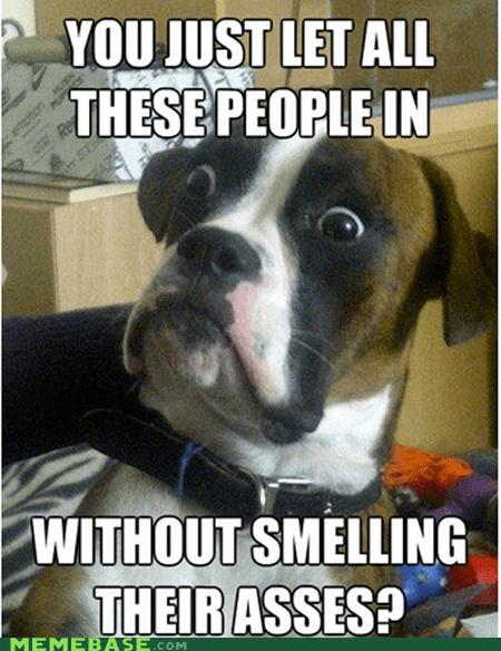 dumbstruck dog,Memes,people,smell