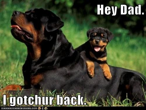 baby,daddy,dogs,fathers day,Rotweiler