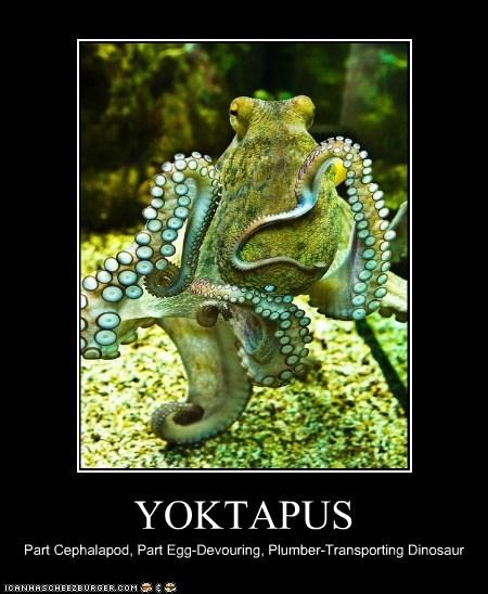YOKTAPUS