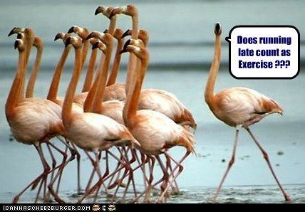 Does running late count as Exercise ???