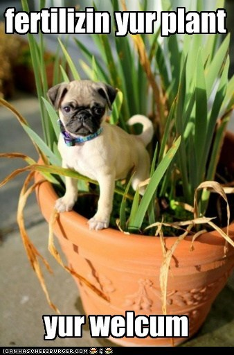 dogs,fertilizer,plant,pug
