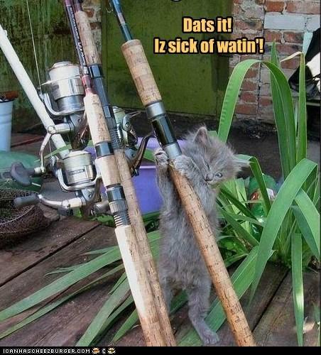 cat,fish,fishing,patient,wait