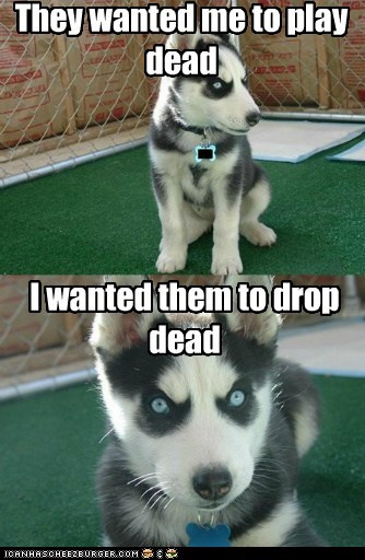 Insanity Pup: They Said Over Their Dead Body. I Agreed
