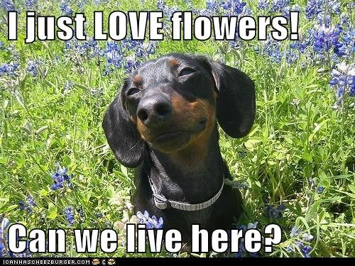 I just LOVE flowers!  Can we live here?