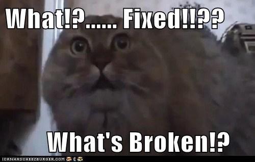 broken,confused,fixed,neuter,scared,shock,vet