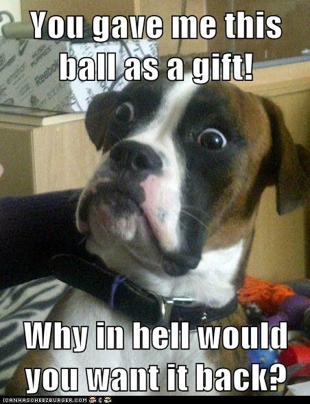 Animal Memes: Baffled Boxer - Stop Throwing it Away Then!