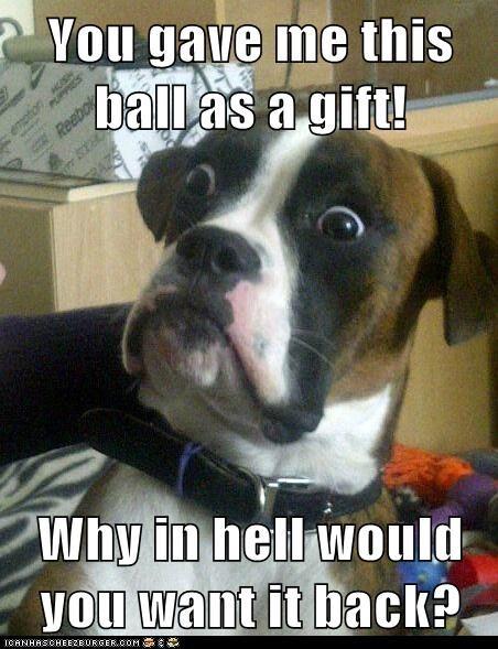 baffled,Baffled Boxer,balls,boxers,confused,dogs,gift,Memes,take back