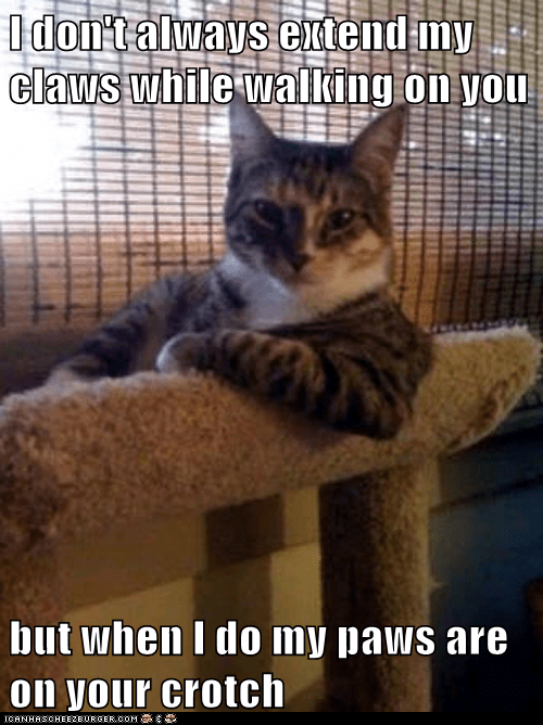 Animal Memes: The Most Interesting Cat in the World - And You're Wearing Sweat Pants