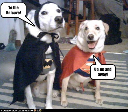 batman,costume,dogs,lab,superman