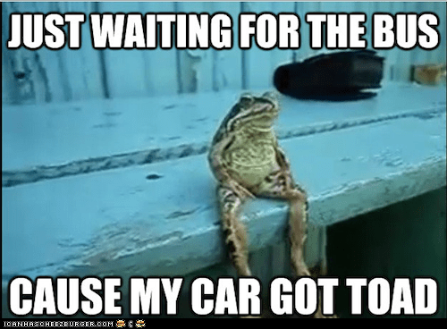 best of the week,bus,cars,frogs,Hall of Fame,human-like,Memes,puns,sitting,toads,towed,waiting