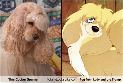"TLL Classic: This Cocker Spaniel Totally Looks Like Peg from ""Lady and the Tramp"""