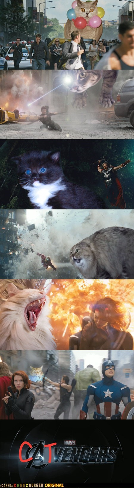 avengers,best of the week,Cats,movies,multipanel,photoshopped,superheroes,The Avengers