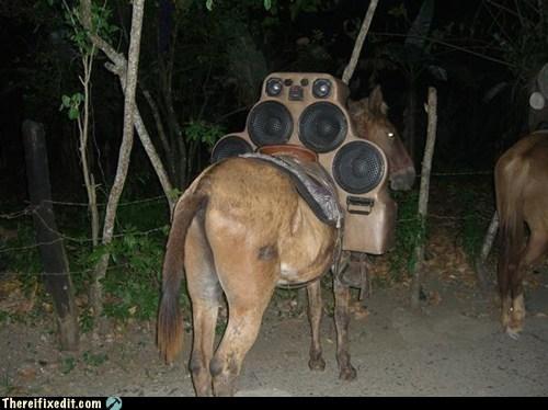 boom box,ghettoblaster,horse,meadow,meadowblaster,saddle,stereo
