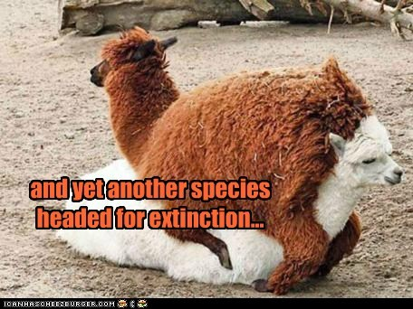 and yet another species headed for extinction...