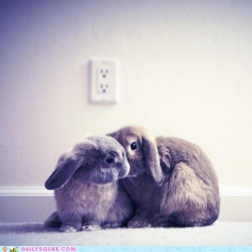 Bunday,bunnies,KISS,secret,whisper