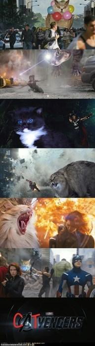 avengers,Cats,Super-Lols,wtf
