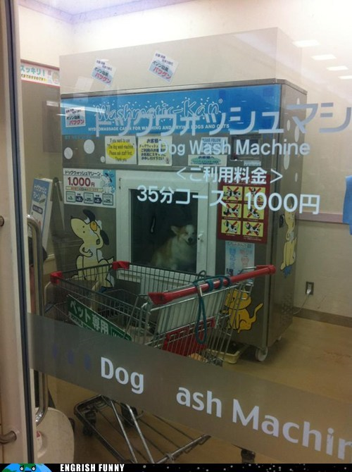 dog washing machine,dogs,hygiene,washing machine