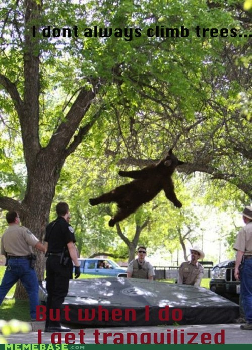Bear Tranquilized lol