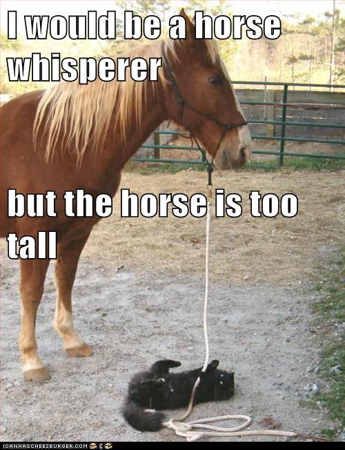 Hey Horse, Lean Down for a Sec, I Got Something to Tell You