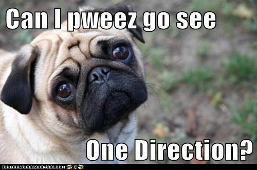 Can I pweez go see  One Direction?