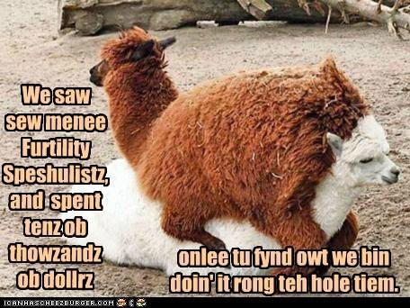 Babies,doing it wrong,drama,fertility,llamas,upside down