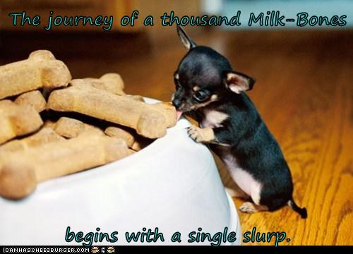 The journey of a thousand Milk-Bones  begins with a single slurp.