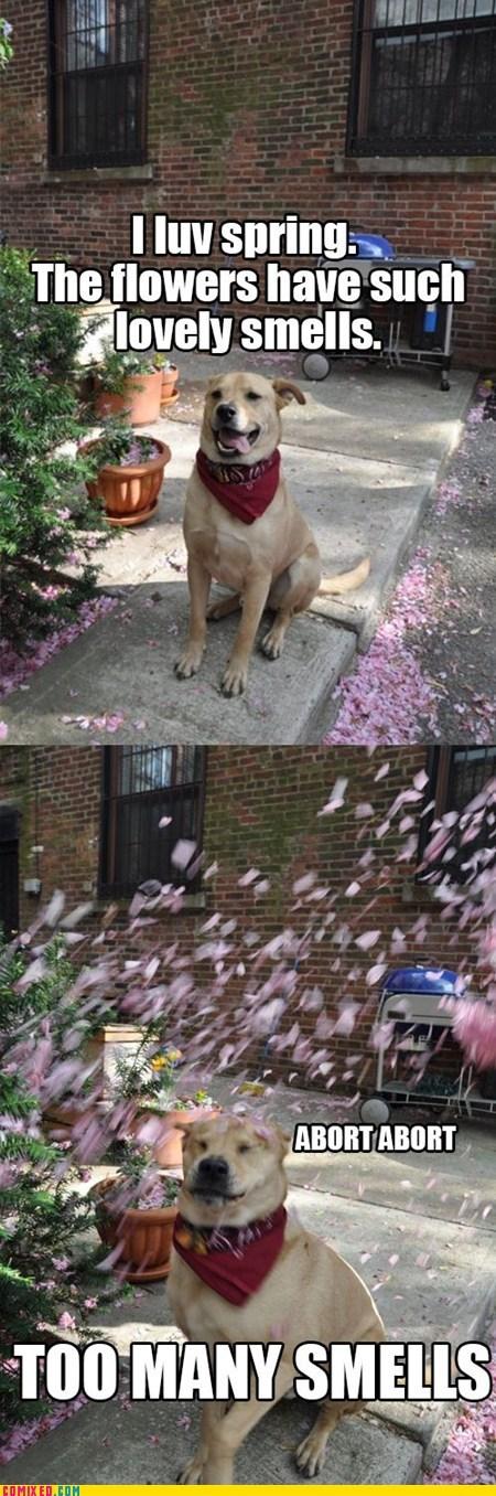 animals,best of week,dogs,overload,smells,spring