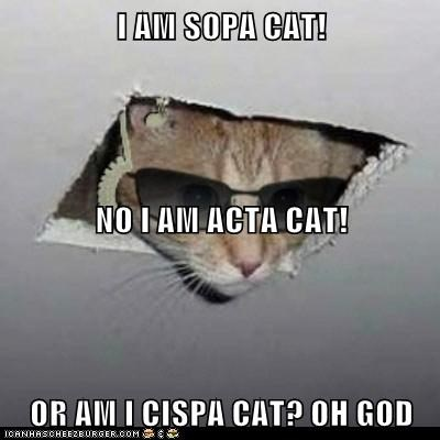 I AM SOPA CAT! NO I AM ACTA CAT! OR AM I CISPA CAT? OH GOD