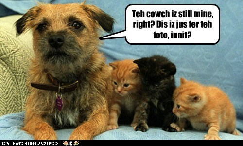 couch,dogs,kitten,mine,what breed