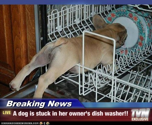 Breaking News - A dog is stuck in her owner's dish washer!!