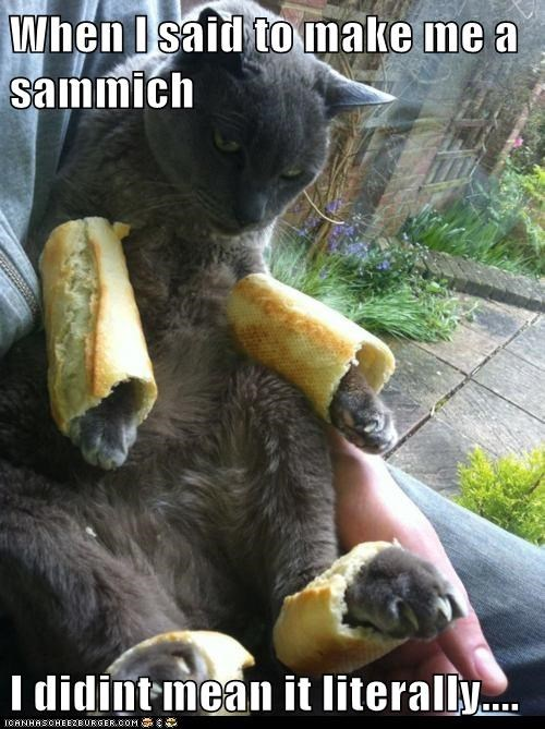 baguettes,best of the week,bread,breading,Cats,food,Hall of Fame,literal,lolcats,outfit,paws,sandwich