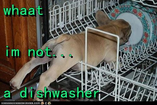 whaat im not... a dishwasher