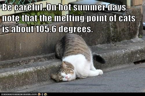 Lolcats: Be Careful...