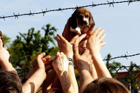 Beagle Liberation of the Day
