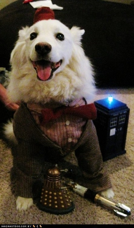 american eskimo dog,best of the week,costume,doctor who,dogs,dressed up,Hall of Fame,Matt Smith,sci fci