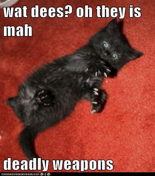 wat dees? oh they is mah  deadly weapons