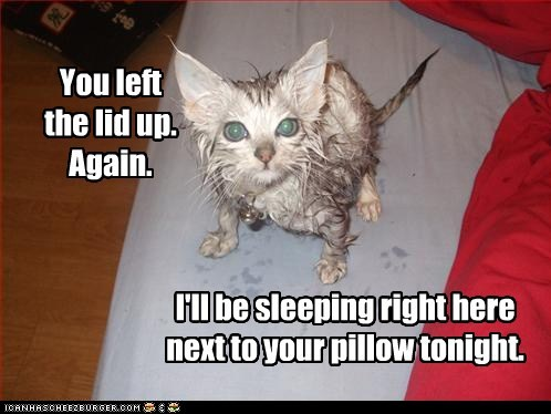 bathroom,bed,Cats,dirty,fall,gross,lolcats,messy,Pillow,revenge,seat,sleep,toilet,toilets,water,wet