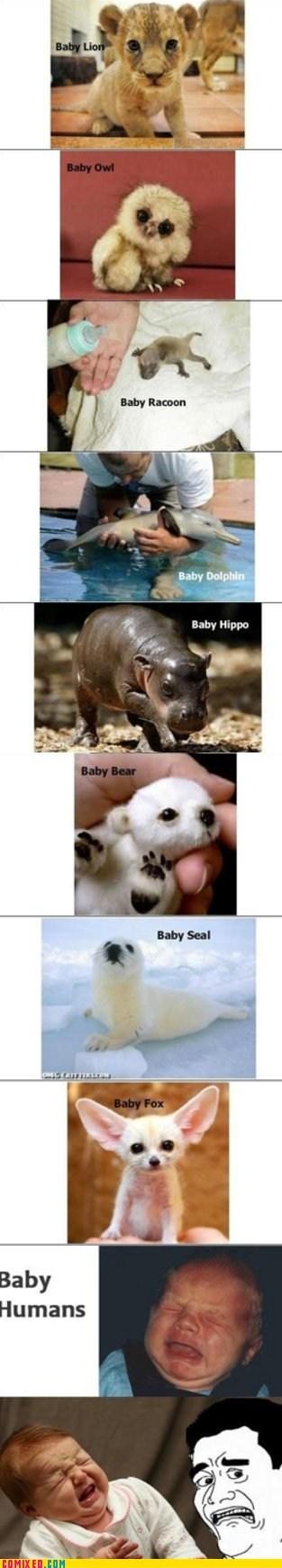 animals,baby animals,best of week,cute