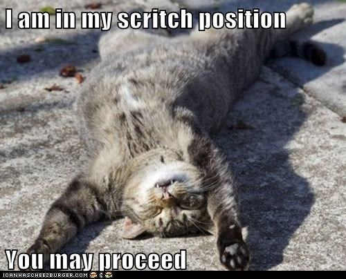 Lolcats: I am in my scritch position