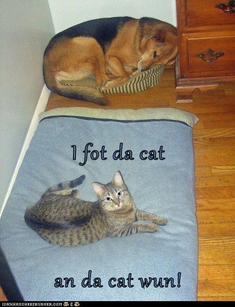 I fot da cat an da cat wun!
