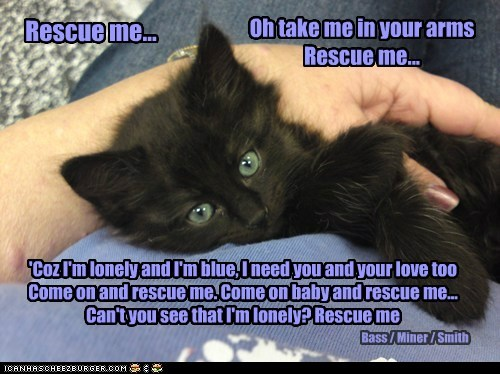 Adopt a Rescue or Shelter Cat