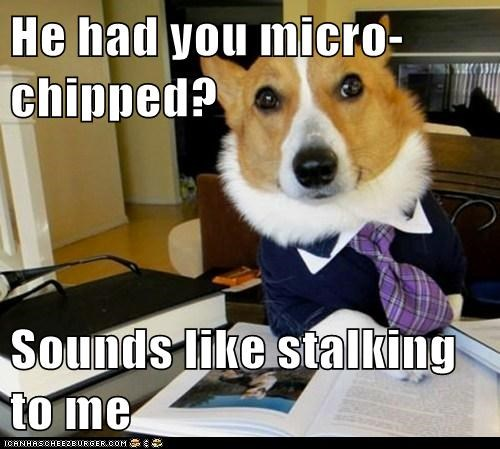 corgis,dogs,Hall of Fame,Lawyer Dog,Lawyers,Memes,microchips,stalking