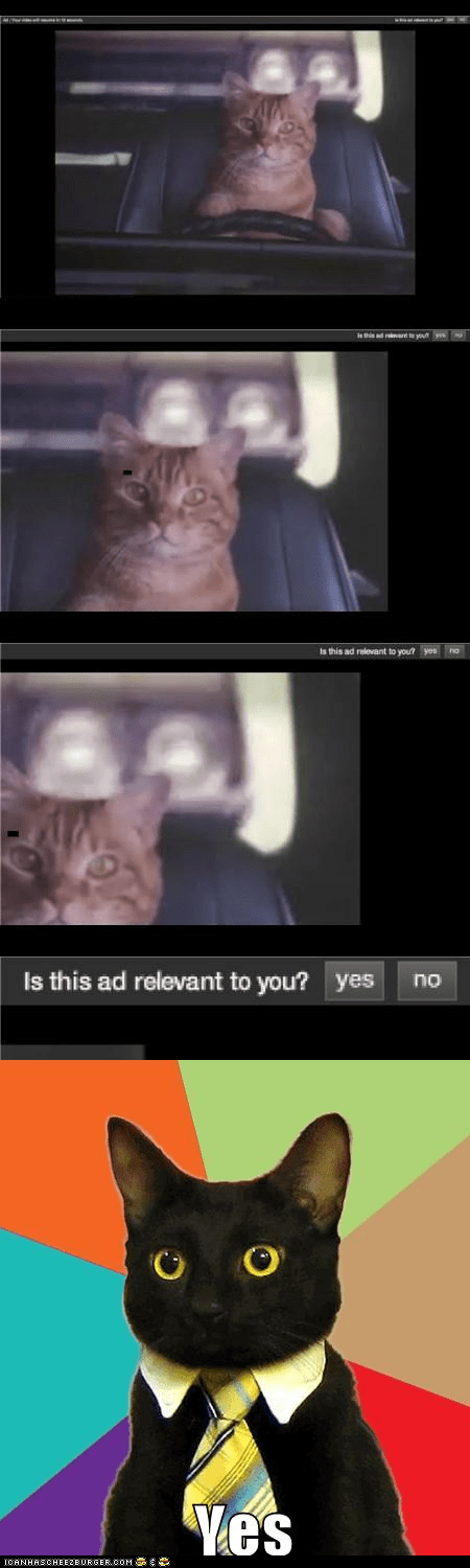 ads,advertising,Business Cat,cars,Cats,driving,Memes,multipanel,relevant