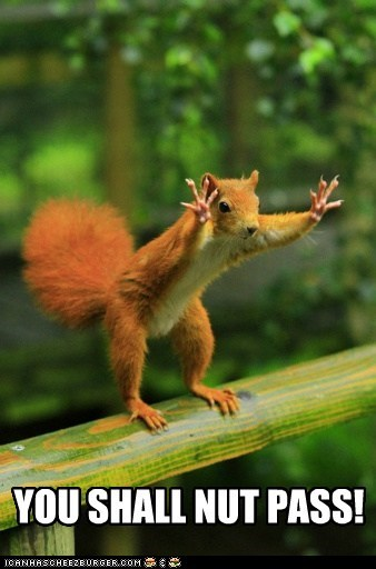 Gandalf the Red... Squirrel