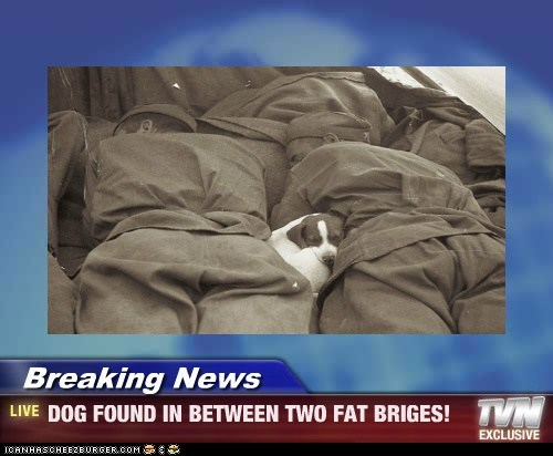 Breaking News - DOG FOUND IN BETWEEN TWO FAT BRIGES!
