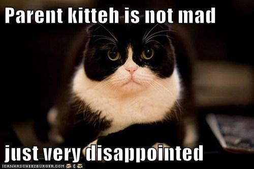Parent kitteh is not mad  just very disappointed
