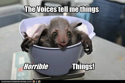aye aye,baby,crazy,horrible,schizophrenic,things,voices