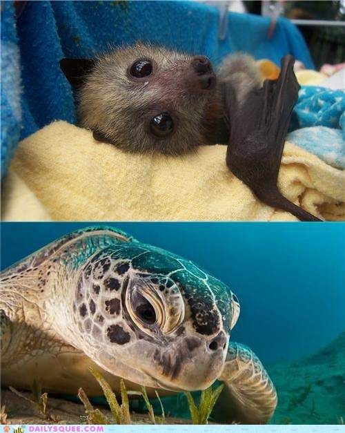 Squee Spree: Bats vs. Sea Turtles
