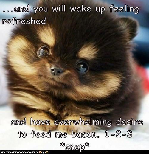 ...and you will wake up feeling  refreshed   and have overwhelming desire to feed me bacon. 1-2-3 *snap*