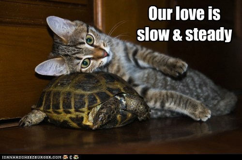 Turtle Love Always Wins Any Race!